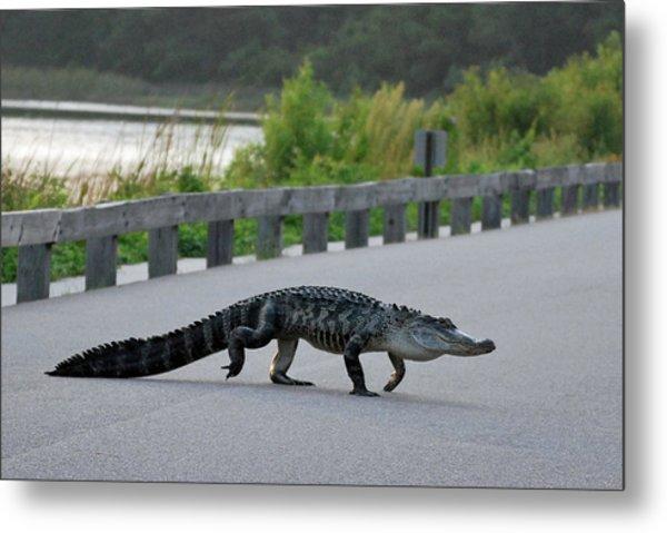 Alligator On A Food Hunt Metal Print