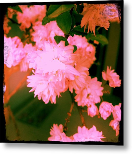 Almond Blossoms Metal Print