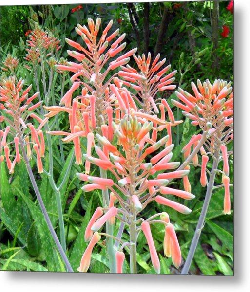 Aloe Crown Of Beauty Metal Print