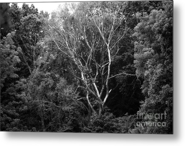Alone In The Woods Metal Print by Anne Boyes