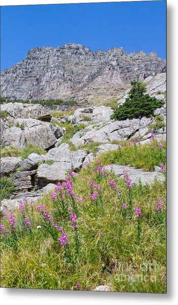 Metal Print featuring the photograph Alpine Abundance 3 by Katie LaSalle-Lowery