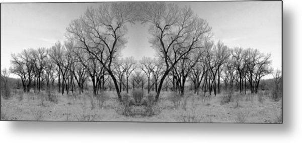 Altered Series - Bare Double Metal Print