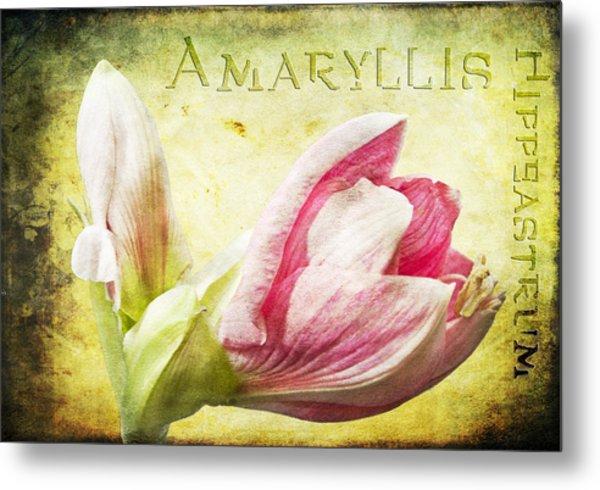 Amaryllis Metal Print