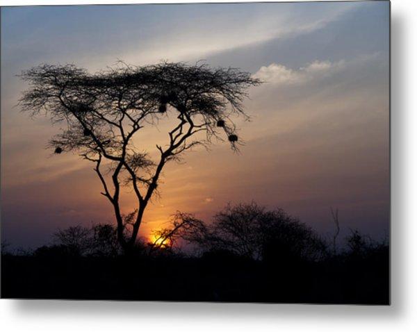 Amboseli Sunrise Metal Print