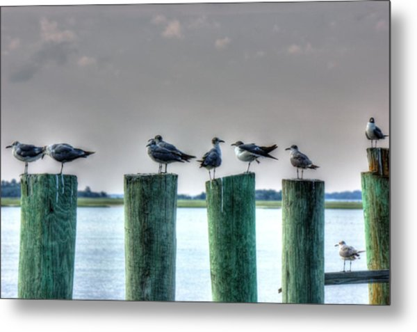 Amelia Island Locals Metal Print by Barry Jones