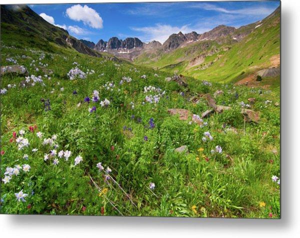 American Basin Wildflowers Metal Print