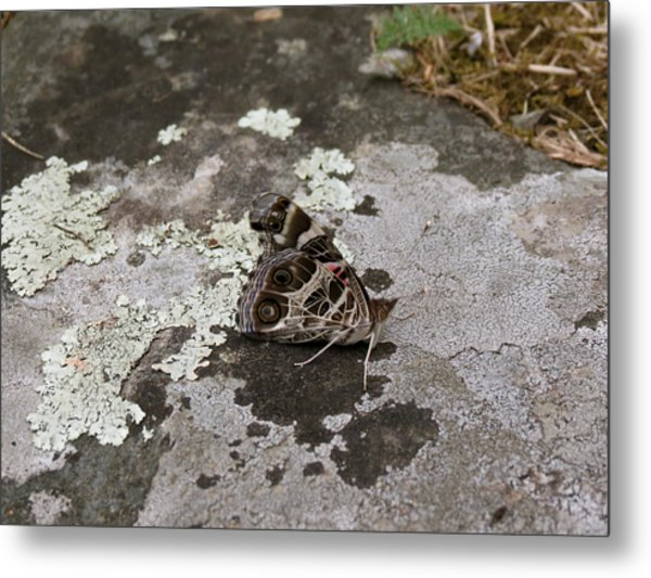 American Beauty Butterfly On Rock Metal Print