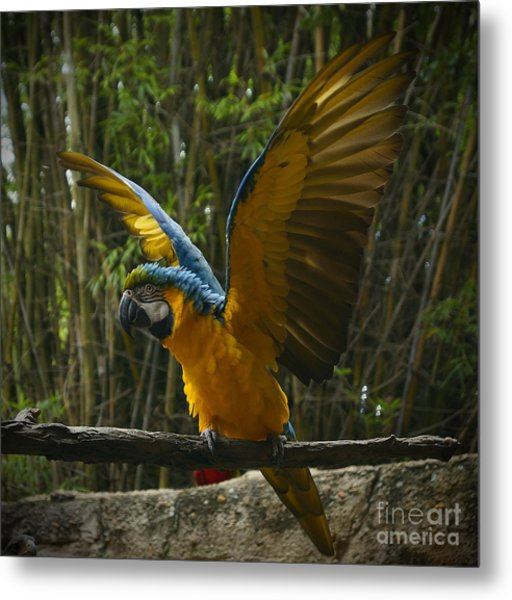 Animal Kingdom - Flights Of Wonder Metal Print