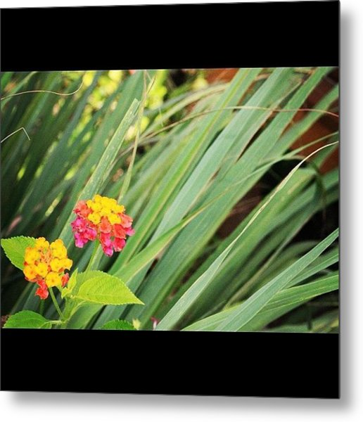 Another Wild Flower By My Lens, A Truly Metal Print