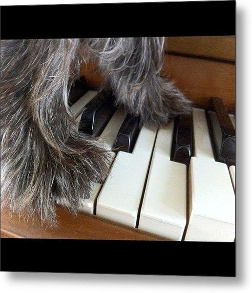 Anyone Can Play Piano. 🐶😊🎶 Metal Print