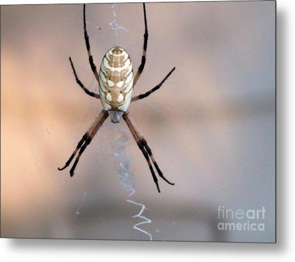 Arachnid Metal Print
