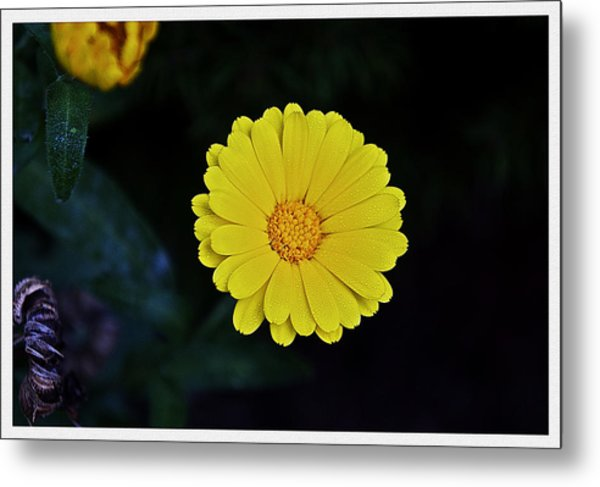 Artwork Of The Nature For A Moment Metal Print