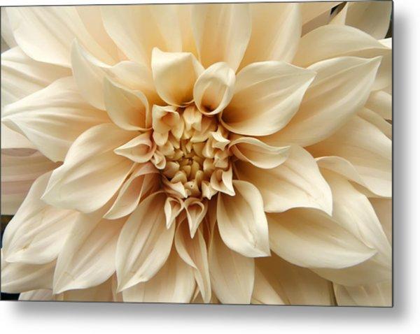 Arundel Blossom Metal Print