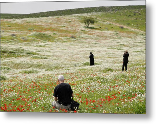 At Lachish's Magical Fields Metal Print
