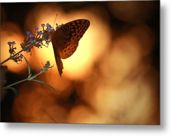 August Evening Metal Print by Kathryn Mayhue