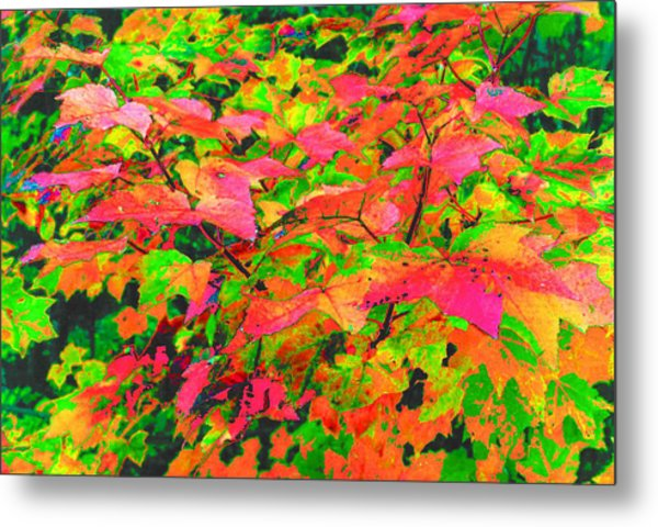 Autum Maple Leaves 3  Metal Print by Lyle Crump