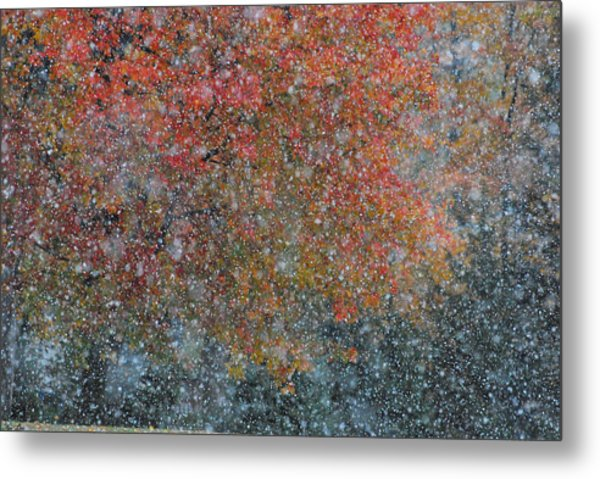 Autumn And Winter Metal Print by Kimberly Little