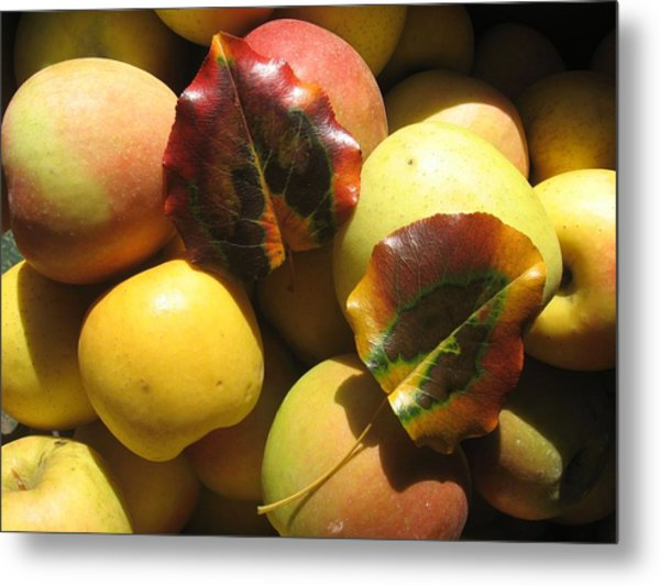 Autumn Apple Afternoon Metal Print