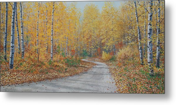 Autumn Birches Metal Print by Jake Vandenbrink