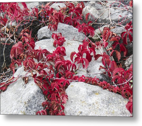 Autumn Color Is Red Metal Print