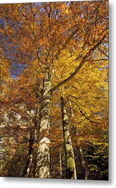 Autumn Colour Metal Print by Bob Gibbons