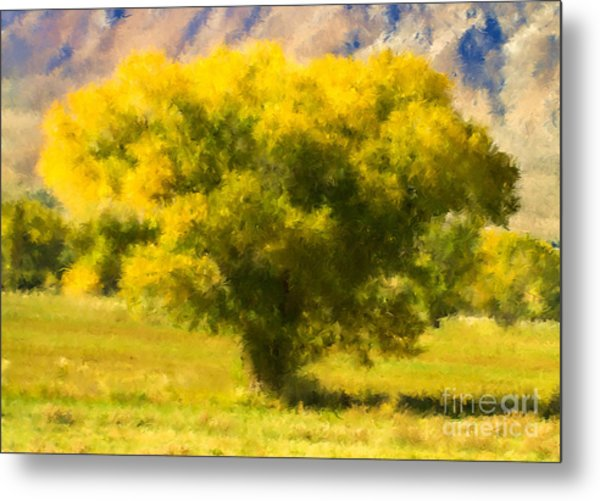 Autumn Cottonwood Metal Print
