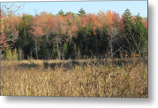 Autumn Field And Pine Metal Print by Loretta Pokorny