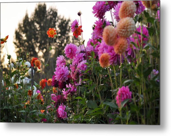 Autumn Flowers Metal Print by Sarai Rachel