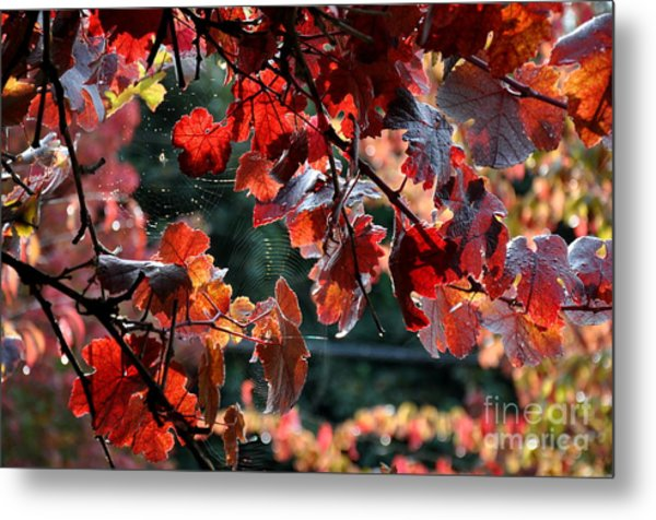 Autumn Grapes And Spider Webs Metal Print
