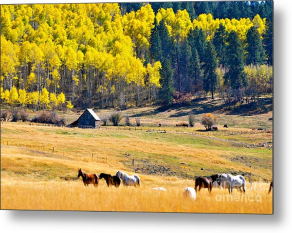 Autumn In Pagosa Metal Print