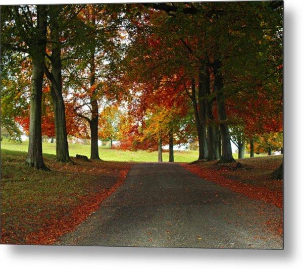 Autumn In Studley Deer Park Metal Print by Steve Watson