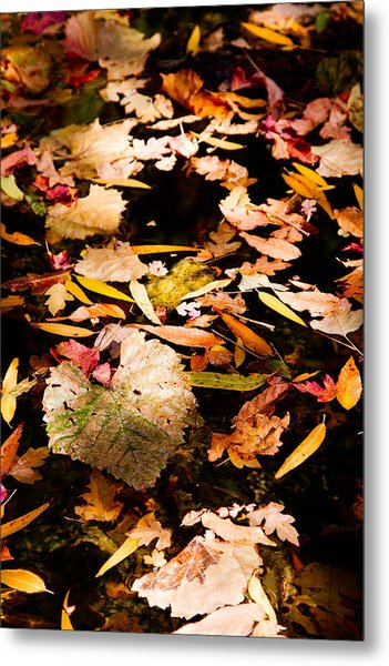 Autumn In Texas Metal Print