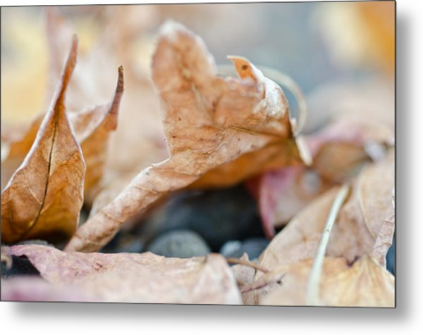 Metal Print featuring the photograph Autumn Leaf Abstract by Margaret Pitcher