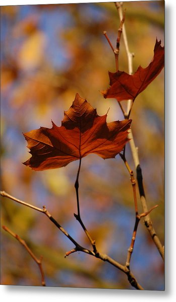 Autumn Leaves II Metal Print by Dickon Thompson