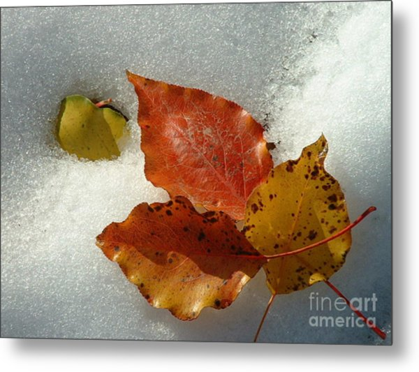Autumn Leaves In Snow Metal Print
