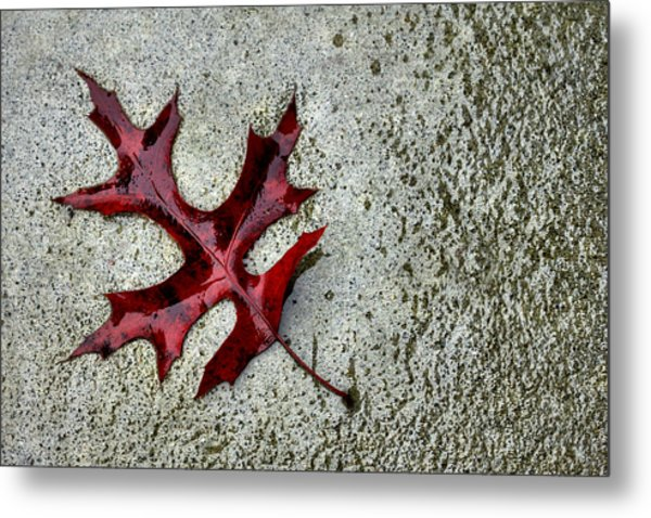 Autumn Oak Leaf On Rainy Day Metal Print