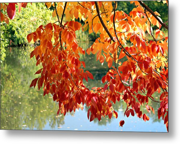 Autumn On The Pond Metal Print