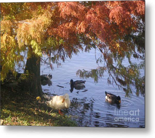 Autumn Peace Metal Print by Lucyna A M Green