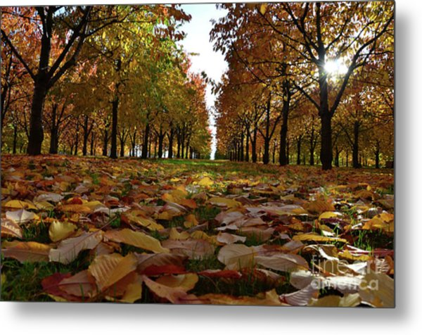 Autumn Sheets Carpet Metal Print