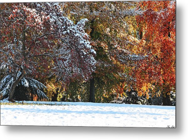 Autumn Snowstorm Metal Print by Kimberly Little