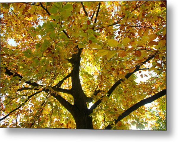 Autumn Sun Metal Print by Karen Grist