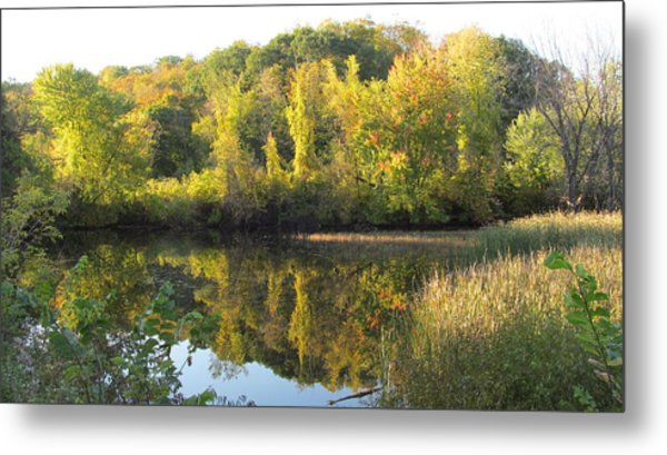 Autumn Sunlight On The Pond Metal Print