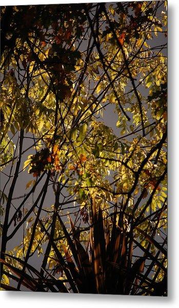 Autumn Trees IIi Metal Print by Dickon Thompson