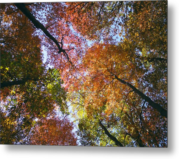 Autumnal Canopy Metal Print