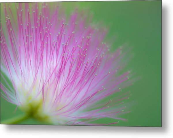 Awesome Blossom Metal Print