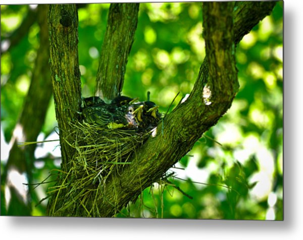 Baby Birds Metal Print by Erica McLellan