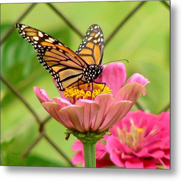 Back Yard Butterfly Metal Print