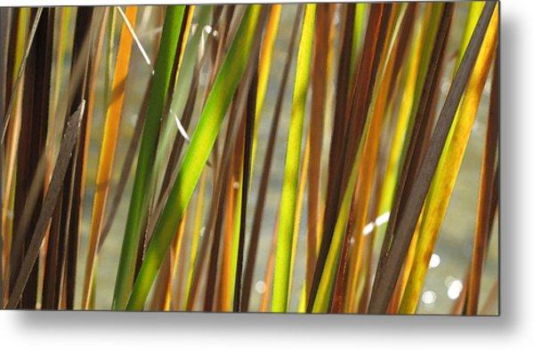 Backlit Grass Wc 2  Metal Print by Lyle Crump