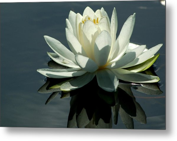 Backlite Lily Metal Print