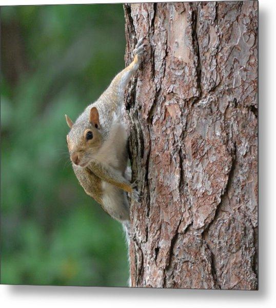 Backyard Squirrel Metal Print